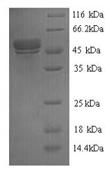 SDS-PAGE separation of QP7209 followed by commassie total protein stain results in a primary band consistent with reported data for Botulinum neurotoxin type F. These data demonstrate Greater than 90% as determined by SDS-PAGE.