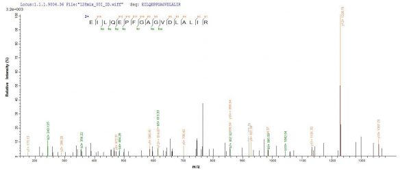 SEQUEST analysis of LC MS/MS spectra obtained from a run with QP7304 identified a match between this protein and the spectra of a peptide sequence that matches a region of Exfoliative toxin A.