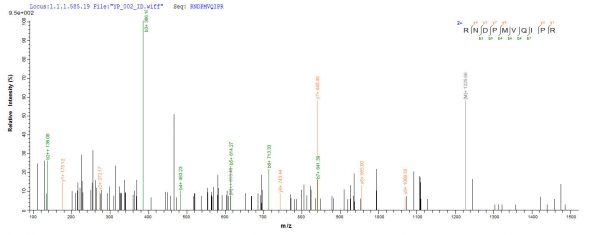 SEQUEST analysis of LC MS/MS spectra obtained from a run with QP7382 identified a match between this protein and the spectra of a peptide sequence that matches a region of Ag85C.