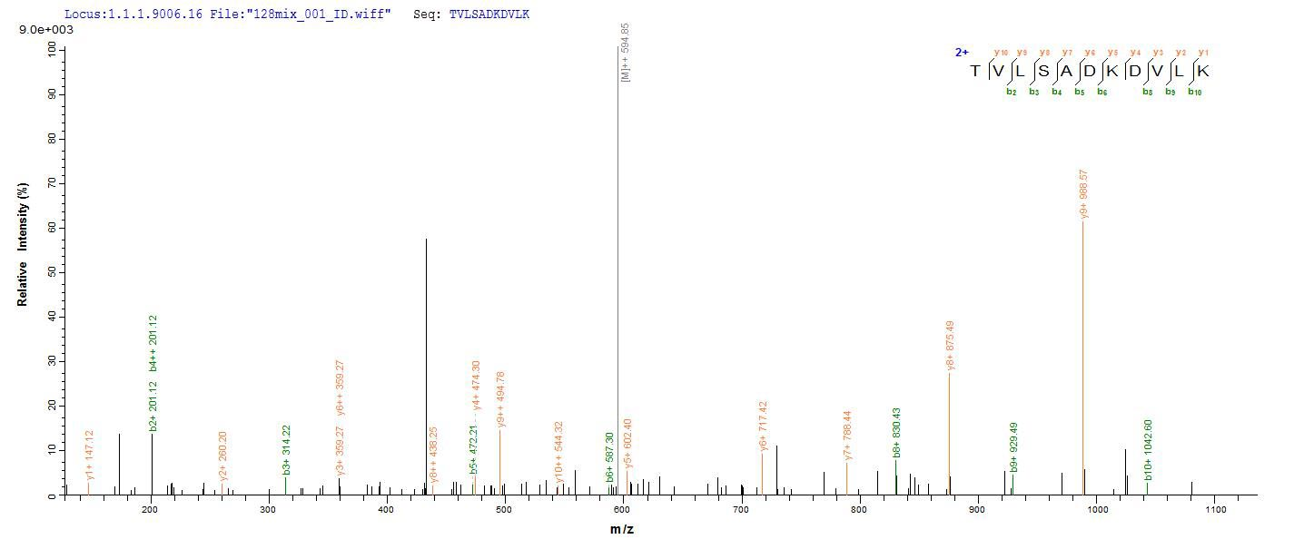 Additional SEQUEST analysis of the LC MS/MS spectra from QP7417 identified an additional between this protein and the spectra of another peptide sequence that matches a region of Recombination protein uvsY confirming successful recombinant synthesis.