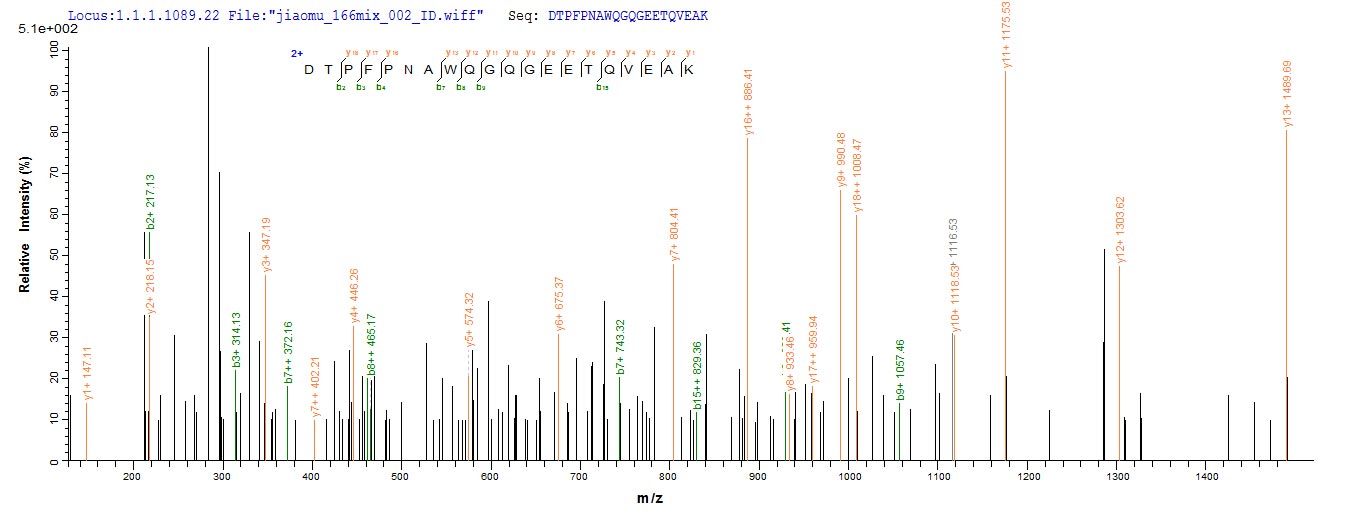 Additional SEQUEST analysis of the LC MS/MS spectra from QP7706 identified an additional between this protein and the spectra of another peptide sequence that matches a region of Adipocyte enhancer-binding protein 1 confirming successful recombinant synthesis.