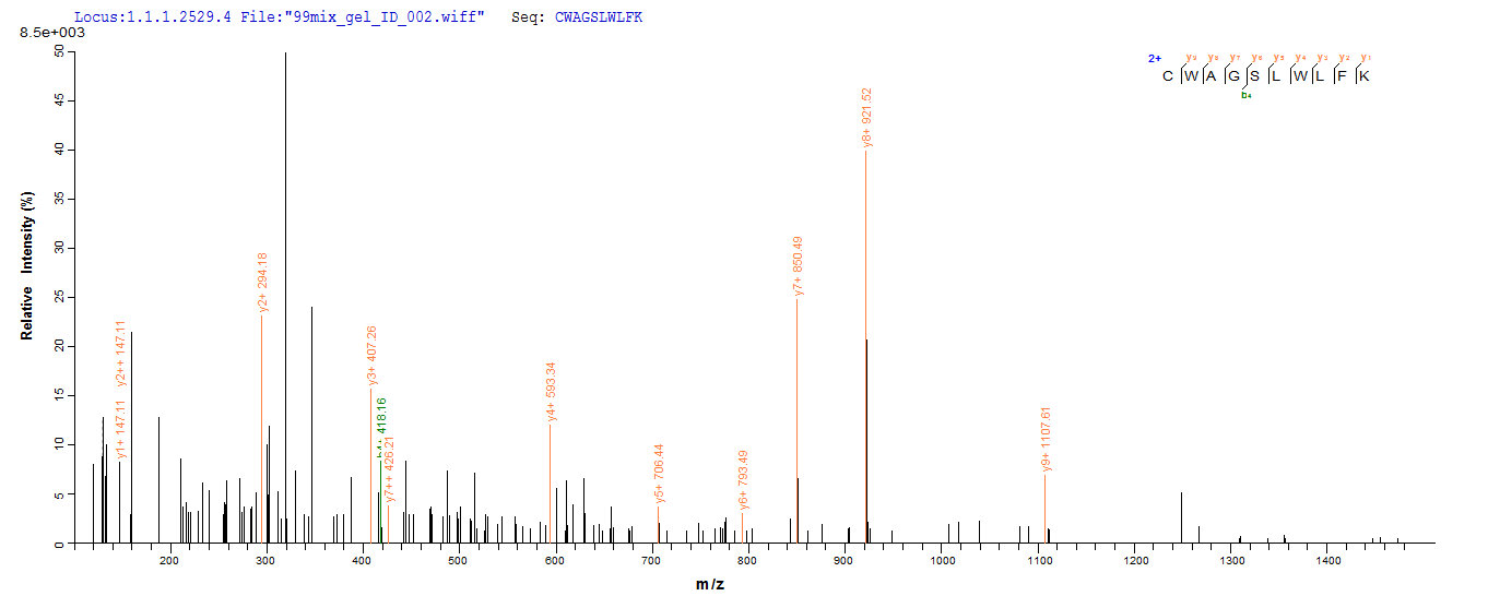 Additional SEQUEST analysis of the LC MS/MS spectra from QP8020 identified an additional between this protein and the spectra of another peptide sequence that matches a region of Methylosome protein 50 confirming successful recombinant synthesis.