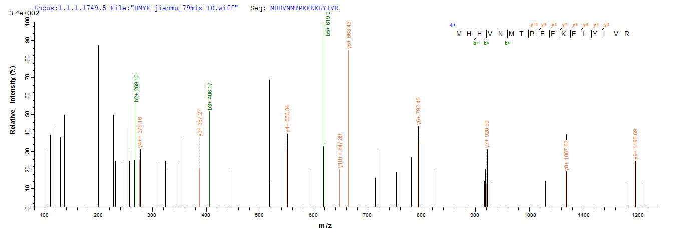 Additional SEQUEST analysis of the LC MS/MS spectra from QP8166 identified an additional between this protein and the spectra of another peptide sequence that matches a region of IFIH1 confirming successful recombinant synthesis.