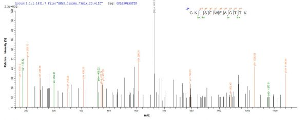 SEQUEST analysis of LC MS/MS spectra obtained from a run with QP8294 identified a match between this protein and the spectra of a peptide sequence that matches a region of Capsid protein.