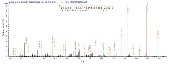 SEQUEST analysis of LC MS/MS spectra obtained from a run with QP8607 identified a match between this protein and the spectra of a peptide sequence that matches a region of HGF / Hepatocyte Growth Factor.