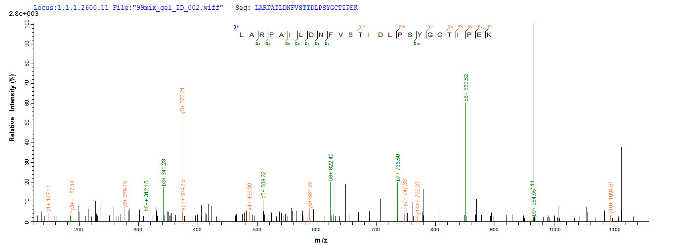 Additional SEQUEST analysis of the LC MS/MS spectra from QP8607 identified an additional between this protein and the spectra of another peptide sequence that matches a region of HGF / Hepatocyte Growth Factor confirming successful recombinant synthesis.