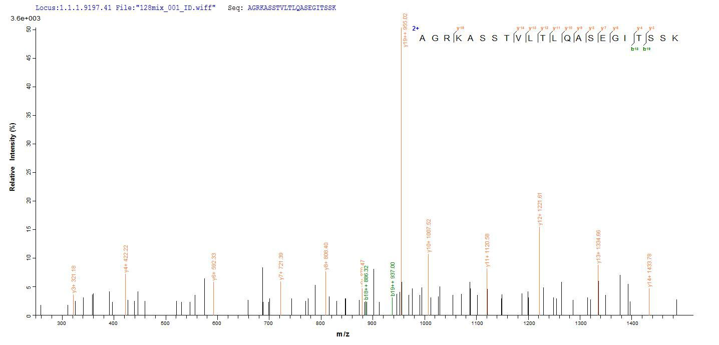 Additional SEQUEST analysis of the LC MS/MS spectra from QP8796 identified an additional between this protein and the spectra of another peptide sequence that matches a region of Vacuolating cytotoxin autotransporter confirming successful recombinant synthesis.