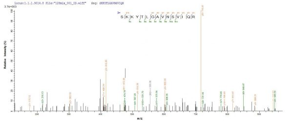 SEQUEST analysis of LC MS/MS spectra obtained from a run with QP8801 identified a match between this protein and the spectra of a peptide sequence that matches a region of Cystathionine beta-lyase MetC.