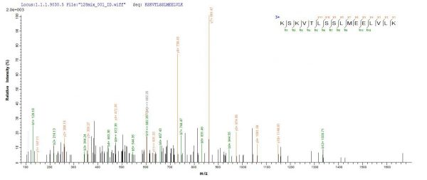 SEQUEST analysis of LC MS/MS spectra obtained from a run with QP8823 identified a match between this protein and the spectra of a peptide sequence that matches a region of Titin.
