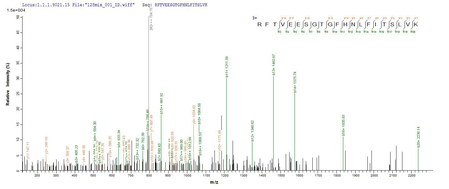 Additional SEQUEST analysis of the LC MS/MS spectra from QP8823 identified an additional between this protein and the spectra of another peptide sequence that matches a region of Titin confirming successful recombinant synthesis.