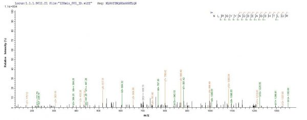 SEQUEST analysis of LC MS/MS spectra obtained from a run with QP8824 identified a match between this protein and the spectra of a peptide sequence that matches a region of HLA-B.