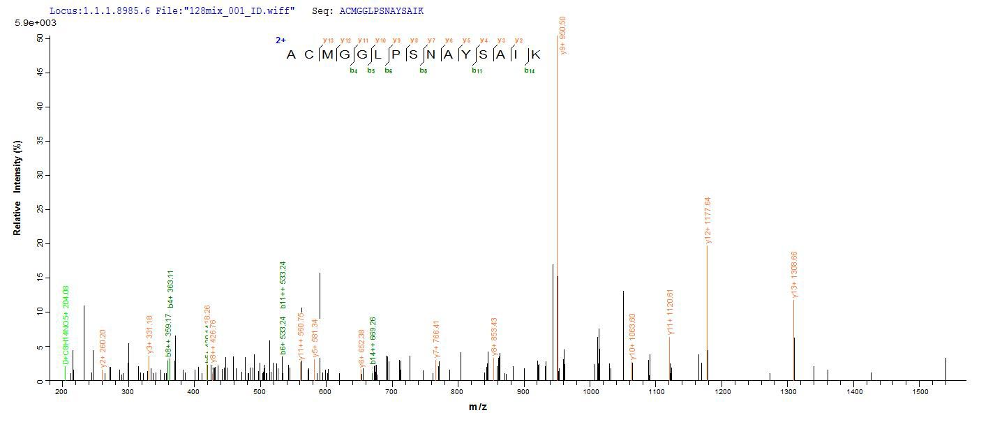 SEQUEST analysis of LC MS/MS spectra obtained from a run with QP8829 identified a match between this protein and the spectra of a peptide sequence that matches a region of Cathepsin F.
