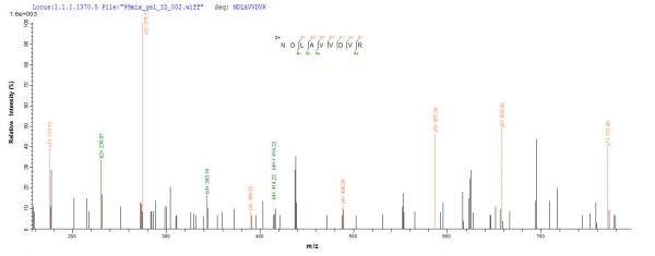 SEQUEST analysis of LC MS/MS spectra obtained from a run with QP9301 identified a match between this protein and the spectra of a peptide sequence that matches a region of Nucleolin.