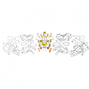 CD28  protein 3D structural model from Catalog of Somatic Mutations in Cancer originally published in the paper COSMIC: somatic cancer genetics at high-resolution