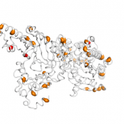 CKB  protein 3D structural model from Catalog of Somatic Mutations in Cancer originally published in the paper COSMIC: somatic cancer genetics at high-resolution