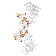 CSNK2B  protein 3D structural model from Catalog of Somatic Mutations in Cancer originally published in the paper COSMIC: somatic cancer genetics at high-resolution