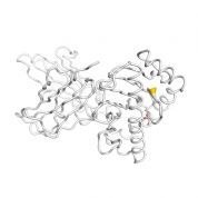 DCT  protein 3D structural model from Catalog of Somatic Mutations in Cancer originally published in the paper COSMIC: somatic cancer genetics at high-resolution