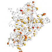 DLD  protein 3D structural model from Catalog of Somatic Mutations in Cancer originally published in the paper COSMIC: somatic cancer genetics at high-resolution