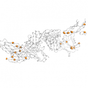 EPOR  protein 3D structural model from Catalog of Somatic Mutations in Cancer originally published in the paper COSMIC: somatic cancer genetics at high-resolution