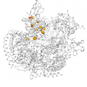 EXOSC1  protein 3D structural model from Catalog of Somatic Mutations in Cancer originally published in the paper COSMIC: somatic cancer genetics at high-resolution