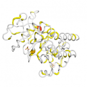 FGFR2  protein 3D structural model from Catalog of Somatic Mutations in Cancer originally published in the paper COSMIC: somatic cancer genetics at high-resolution