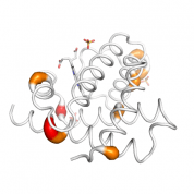 Myo  protein 3D structural model from Catalog of Somatic Mutations in Cancer originally published in the paper COSMIC: somatic cancer genetics at high-resolution