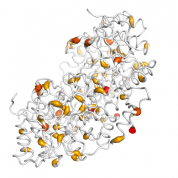 ODC1  protein 3D structural model from Catalog of Somatic Mutations in Cancer originally published in the paper COSMIC: somatic cancer genetics at high-resolution