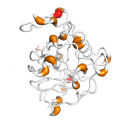 Cyclophilin C  protein 3D structural model from Catalog of Somatic Mutations in Cancer originally published in the paper COSMIC: somatic cancer genetics at high-resolution