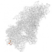 RPS19  protein 3D structural model from Catalog of Somatic Mutations in Cancer originally published in the paper COSMIC: somatic cancer genetics at high-resolution