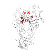 S100A6  protein 3D structural model from Catalog of Somatic Mutations in Cancer originally published in the paper COSMIC: somatic cancer genetics at high-resolution