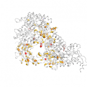 UMOD protein 3D structural model from Catalog of Somatic Mutations in Cancer originally published in the paper COSMIC: somatic cancer genetics at high-resolution