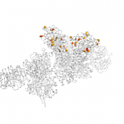 UNG protein 3D structural model from Catalog of Somatic Mutations in Cancer originally published in the paper COSMIC: somatic cancer genetics at high-resolution