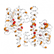 YWHAG  protein 3D structural model from Catalog of Somatic Mutations in Cancer originally published in the paper COSMIC: somatic cancer genetics at high-resolution