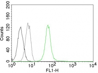 Flow Cytometry of human Vimentin on Jurkat Cells.Black: Cells alone; Grey: Isotype Control.Green: AF488-labeled Vimentin Mouse Monoclonal Antibody (VM452).
